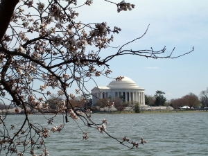 3.26.11 DC Cherry Blossoms2