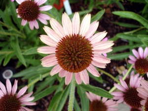 7.4.11 DC US Botanic Garden flower1