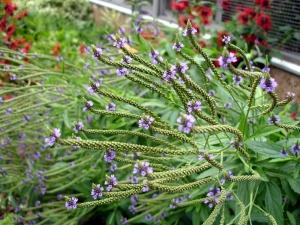 7.4.11 DC US Botanic Garden flower3