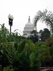 7.4.11 DC US Capitol from US Botanic Garden