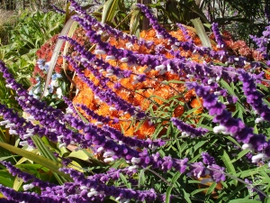 Biltmore Gardens Ashville NC 11.8.12 mcm