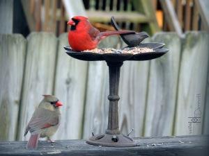 cardinals together3  mcm