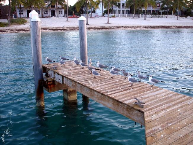 seagull pier mcm