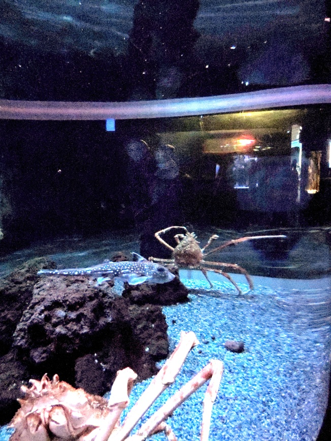Giant Japanese Spider Crab with people