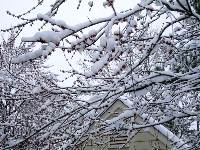 Snow Day 001